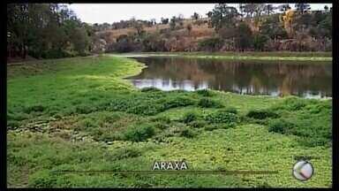 Quantidade de aguapés no Lago Norte do Complexo do Barreiro preocupa visitantes em Araxá - Apesar de ter a capacidade de absorver elementos químicos e limpar a água, as plantas aquáticas em excesso podem causar desequilíbrios e danos ambientais.