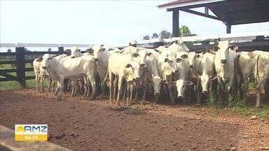 Casos com sintomas semelhantes a raiva animal foram identificados no interior de RO - A Idaron está intensificando a área de fiscalização