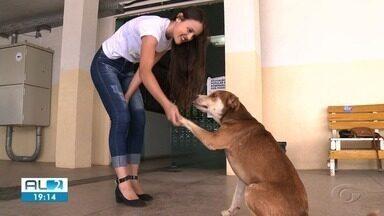 Voluntários de Arapiraca transformam vida de animais abandonados - 29 de agosto é o Dia do Voluntariado.