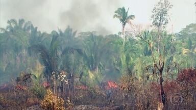 Há 9 anos a Amazônia não sofre tanto com as queimadas como em 2019 - Já são mais de 60 mil focos de incêndio. Os números são do Inpe, o Instituto de Pesquisas Espaciais.