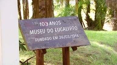 Reserva ambiental em Rio Claro tem museu dedicado ao eucalipto - Veja também: zoológico de SP reinaugura o formigueiro.