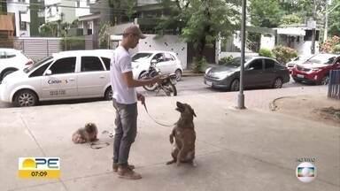 Dia do veterinário: saiba como escolher o profissional para cuidar de bichos de estimação - População precisa ficar atenta na hora de procurar profissionais para cuidar dos pets.