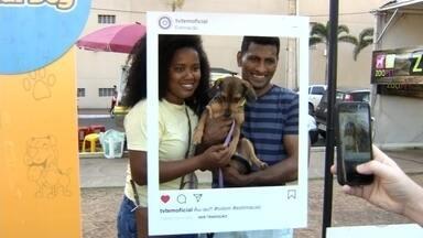 Estimacão reúne mais de 8 mil pessoas em Araçatuba - O Estimaacão de Araçatuba (SP) reuniu mais de 8 mil pessoas neste domingo (8) na cidade. O evento ofereceu diversas atividades para os pets.