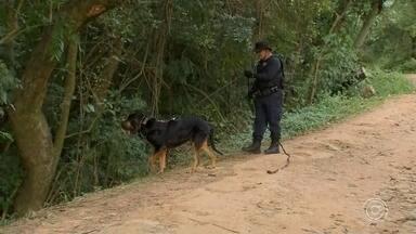 Cão farejador auxilia nas buscas pela jovem desaparecida em Alumínio - As buscas à jovem de 19 anos que desapareceu em Alumínio (SP) entram no quarto dia. A polícia conta com o apoio de um cão farejador para encontrar pistas de Aline Dantas.