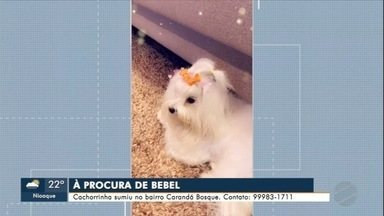 Família procura cachorrinha que sumiu no bairro Carandá Bosque - Informações pelo telefone 99983-1711