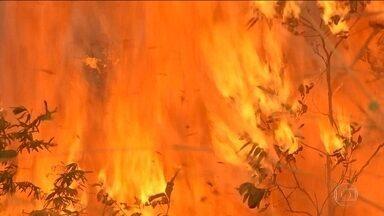 Peritos americanos chegam a Mato Grosso para ajudar no combate às queimadas - Em Mato Grosso, 28 cidades estão em alerta por causa das queimadas que devastam a região destruindo as matas e os animais. Nesta sexta (13), peritos da guarda florestal americana chegam ao estado para ajudar no combate aos incêndios.