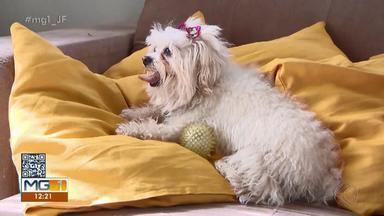 TV Bicho: Saiba como cuidar dos animais em dias mais quentes - Veterinária dá dicas para eliminar pulgas e carrapatos de cachorros e gatos.