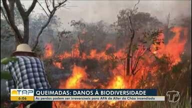 Perdas da biodiversidade da APA Alter do Chão podem ser irreversíveis - Queimadas atingem a região desde a tarde de sábado.