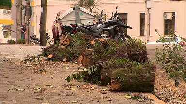 Corte das árvores em Santa Maria vai para a justiça - Assista ao vídeo.