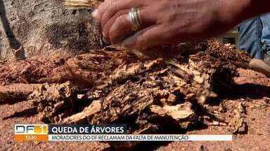 DF conta com muitas árvores antigas e doentes com risco de cair - São mais de 250 espécies de árvores catalogadas pela Novacap. Moradores reclamam de falta de manutenção.