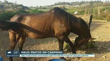 Guarda encontra sete cavalos em situação de abandono no Jardim Itayú, em Campinas - Animais foram localizados na tarde desta terça-feira (17). Prefeitura informou que aguarda a definição de um local de abrigo para remover os cavalos do local.