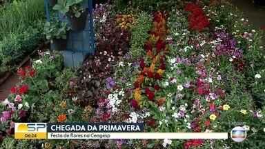 Ceagesp em São José do Rio Preto já comemora a chegada da primavera - Produtores estão animados com o tempo quente.