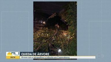 Árvore cai em Copacabana - Trânsito ficou ruim.
