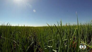 Juiz proíbe retirada de água de córregos para cultivo da cebola em Cristalina - Falta de água devido ao tempo seco motivou decisão.