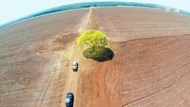 O processo de reflorestamento da Amazônia após desmatamentos - Projeto que recupera solos que sofreram queimadas ou foram desmatados. Ele acontece há mais de dez anos e já fez renascer mais de 6 mil hectares na região da bacia do Xingu, na Amazônia.