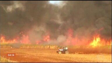 Fogo assusta moradores de áreas rurais em Goiás - Nas estradas, os motoristas ficam com medo da fumaça que pode provocar acidentes. Os incêndios avançam e chegam perto de escolas, de usinas e de agroindústrias, isso depois de destruir áreas de cerrado e plantações.