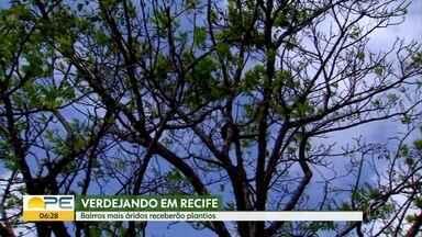 Verdejando: plantio de árvores ajuda a amenizar temperatura das cidades - Na próxima emana, emissoras da Globo estão juntas mostrando a importância das árvores.