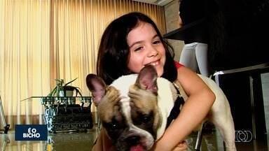 Quadro 'É o Bicho' dá dicas de como cuidar de animais alérgicos a determinados alimentos - Segundo veterinária, doença não tem cura, mas pode ser tratada.