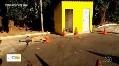 PRF resgata animais silvestres que fogem de incêndios em Goiás - Um dos animais é um veado-catingueiro.