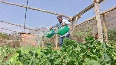 Horticultores reduzem cultivos devido à seca - Com menos água para irrigar as hortas, produtores de Chapada diminuem a quantidade de produtos.