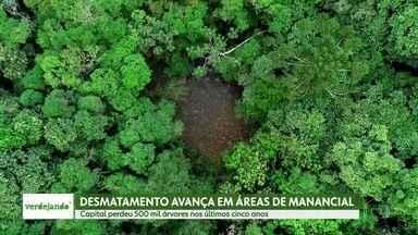 Verdejando: desmatamento clandestino gera preocupação com a mata de São Paulo - Loteamento clandestinos desmatam milhares de quilômetros de árvores e colocam osmananciais da cidade em risco.