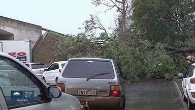 Queda de árvore interdita parte da marginal da Avenida Bandeirantes em Ribeirão Preto - Galhos no asfalto causaram transtornos ao trânsito na manhã desta quinta-feira (26).