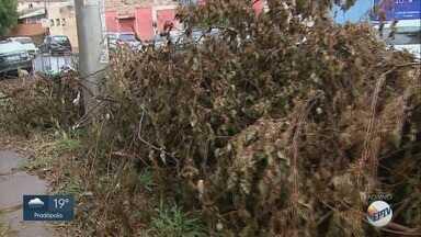 Prefeitura deixa de recolher galhos de árvores há 3 meses em Ribeirão Preto - Coordenadoria de Limpeza Urbana afirma que 2 mil toneladas de restos de poda estão espalhadas por ruas e avenidas.
