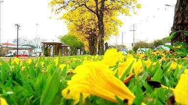 Alergias se intensificam com a chegada da primavera - Confira algumas dicas para amenizar os sintomas.