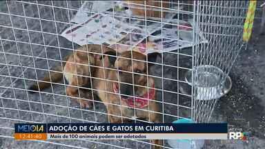 Mais de 100 cães e gatos podem ser adotados em feira - A feira é no Parque Barigui, em Curitiba.