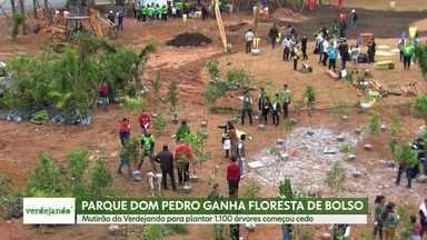 Verdejando: Mutirão planta 1.100 árvores no centro de São Paulo - Projeto Verdejando trouxe para SP 1.480 novas árvores.