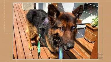 Cão agredido pelo dono está bem e tem um novo lar - Agressor pode pagar multa pelo ocorrido.
