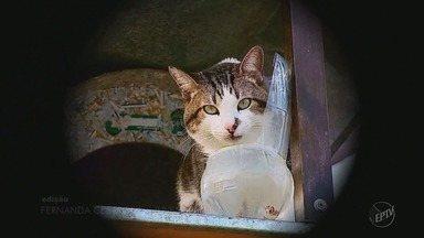 Gato fica quase 3 anos em árvore e vira atração turística em São José da Barra (MG) - Gato fica quase 3 anos em árvore e vira atração turística em São José da Barra (MG)