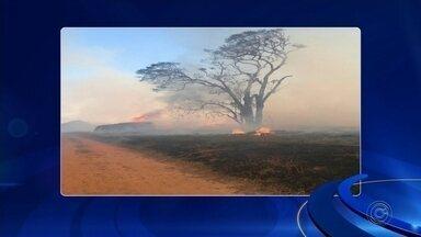 Incêndio destrói galpão de granja e mata pintinhos em Itaí - Um incêndio destruiu o galpão de uma granja de Itaí (SP), na noite de domingo (29).