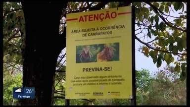Locais em Divinópolis seguem interditados por risco de carrapato-estrela - Campos de futebol do Manoel Valinhas, Centro de Treinamento do Corpo de Bombeiros e o Parque da Ilha foram fechados após encontrarem o animal transmissor da febre maculosa.