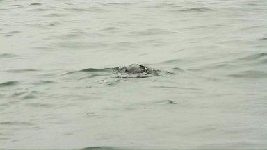 Lobo-marinho voltou para o mar - O animal tinha sido resgatado no litoral do estado pelos pesquisadores da UFPR em agosto.