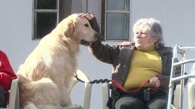Lar de Idosos usa cães na terapia com pacientes - Asilo na cidade de Xanxerê, no interior de Santa Catarina, tem resultados impressionantes com ajuda dos amigos de quatro patas.