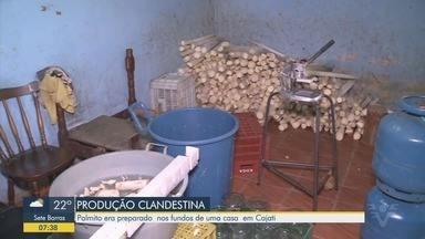Polícia localiza centro clandestino de preparo de palmito no Vale do Ribeira - Produto era preparado nos fundos de uma casa em Cajati.
