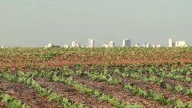 Assista ao bloco 01 do Caminhos do Campo do dia 06 de outubro de 2019 - Começa o plantio de feijão no Paraná