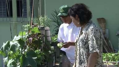 Conheça a 'Horta do Ditian' que tem transformado a vida de muita gente - Todos os dias um novo vídeo sobre o cultivo e os benefícios das plantas para o bem-estar