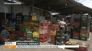 Super produção de manga gera queda nos preços da fruta e prejuízo para produtores - A região norte do estado está sendo a mais afetada.