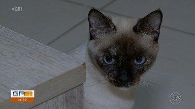 Criadores devem ficar atentos às doenças virais em gatos - Os felinos podem pegar Aids