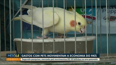 Gastos com pets movimentam a economia do Brasil - Em alguns casos o valor gasto por mês pode passar dos 400 reais.