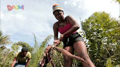 Produção da goma de mandioca é destaque no Daqui - Programa deste sábado (5) reapresentou uma reportagem na comunidade de Bom Jesus que fica situada na zona rural da cidade de Rosário para mostrar todo o processo da fécula de mandioca.