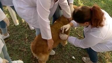Domingo de imunização de cães e gatos, em Santa Cruz - Ação vacinou cerca de mil animais contra o vírus da Raiva.