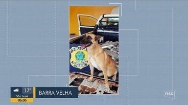Giro de notícias: Cão encontra mais de 90 kg de maconha escondidos em picape em SC - Giro de notícias: Cão encontra mais de 90 kg de maconha escondidos em picape em SC