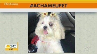 #AchaMeuPet: telespctadores mandam fotos para tentar encontrar animais desaparecidos - Veja como ajudar!