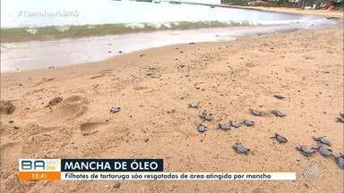 Cerca de 10 toneladas de resíduos de óleo são recolhidos em seis cidades baianas - A substância já atingiu os municípios de Jandaíra, Conde, Esplanada, Entre Rios e Mata de São João, no litoral baiano.