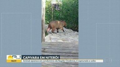 Capivara faz visita à condomínio da Região Oceânica de Niterói - Guardas municipais capturaram o animal e o soltaram na Canal de Camboatá.