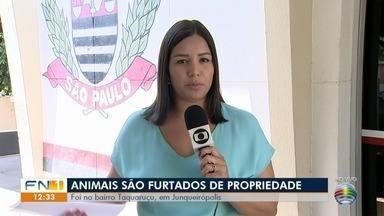 Furto de gados é registrado em propriedade rural em Junqueirópolis - Porteira estava arrombada e proprietário deu falta de dezenas de animais.