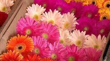 Produtores intensificam produção de flores em Barbacena - Primavera é momento importante para o município, que tem vocação para produção no segmento.